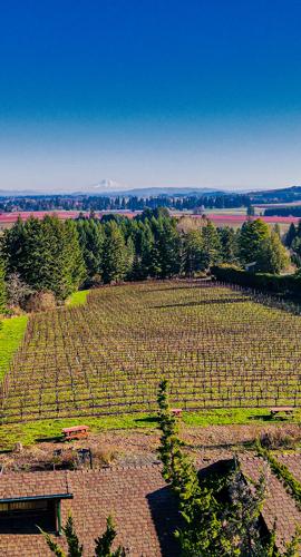 Sidereus-Vineyard-and-Winery-12