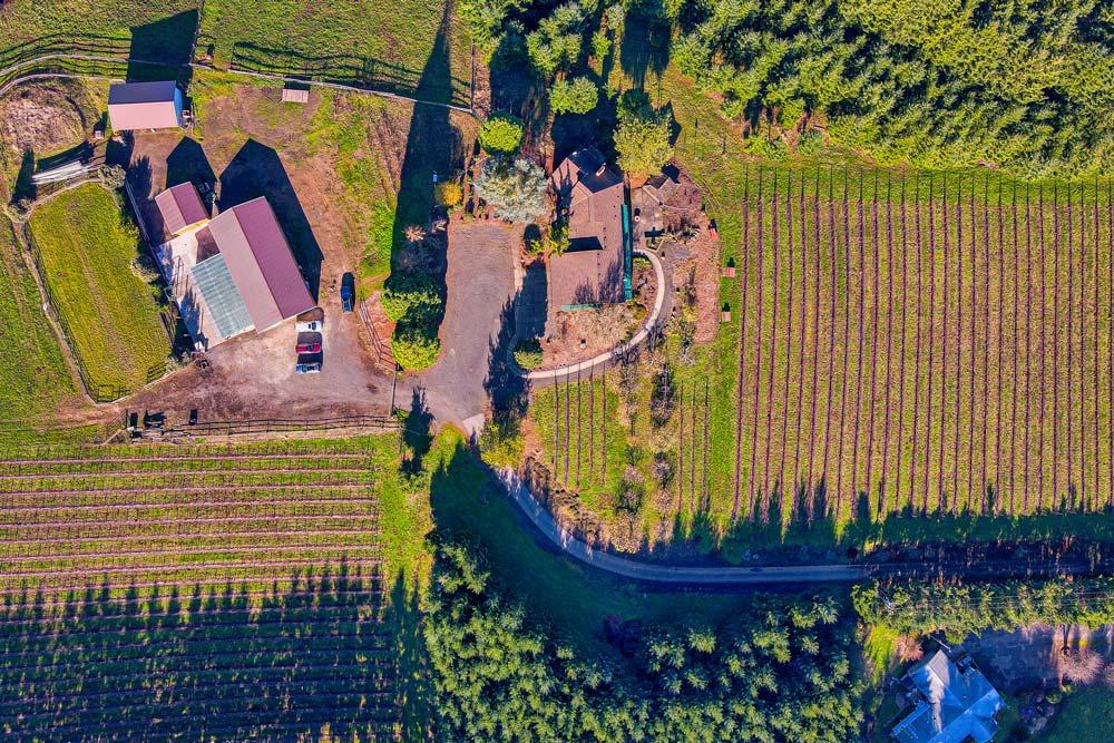 Sidereus-Vineyard-and-Winery-13-2