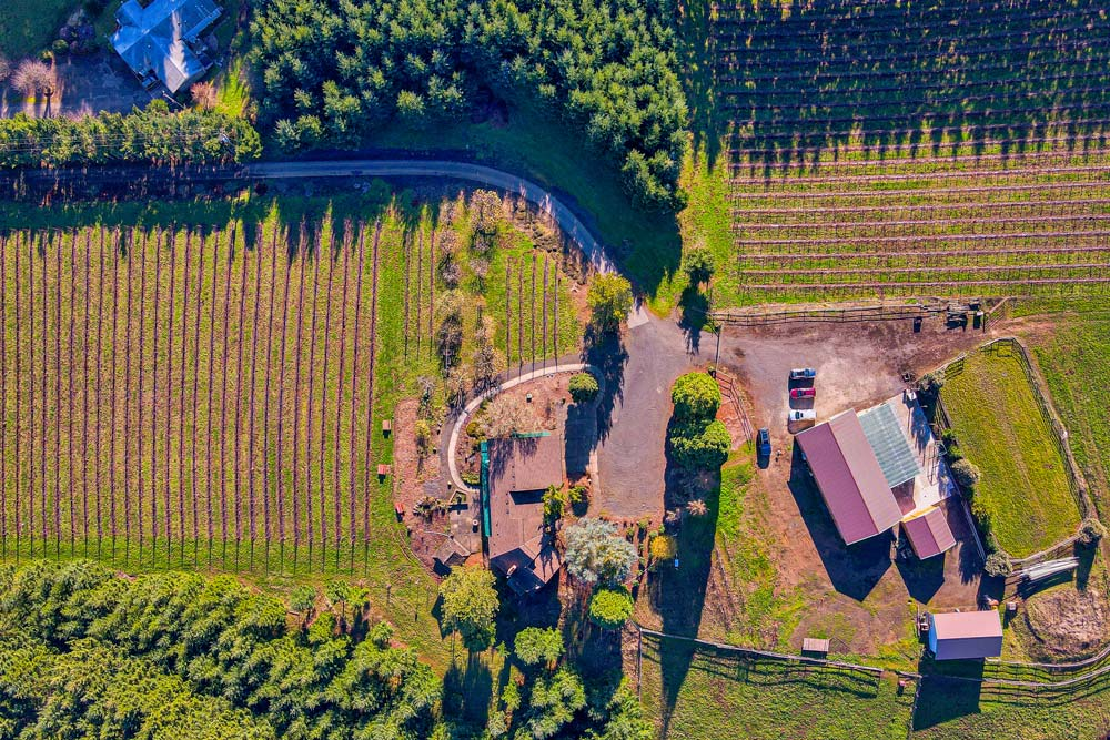 Sidereus-Vineyard-and-Winery-13